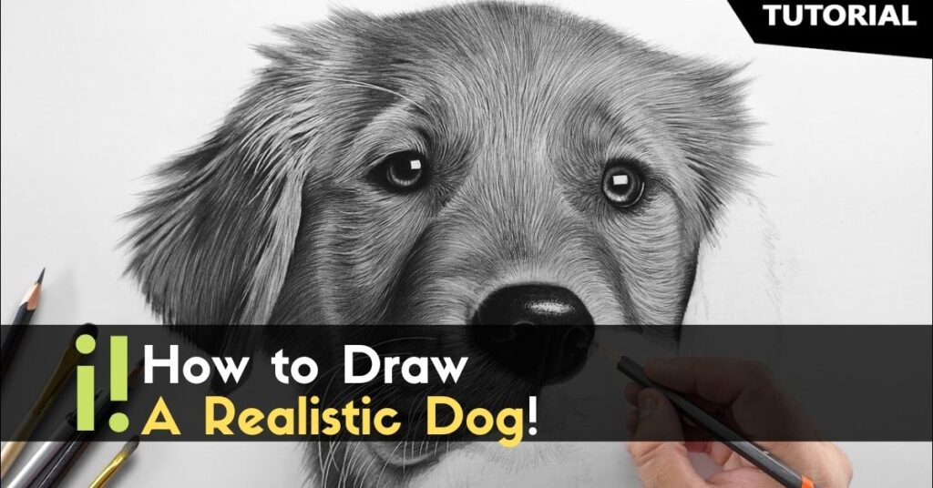 How to Draw a Realistic Dog!