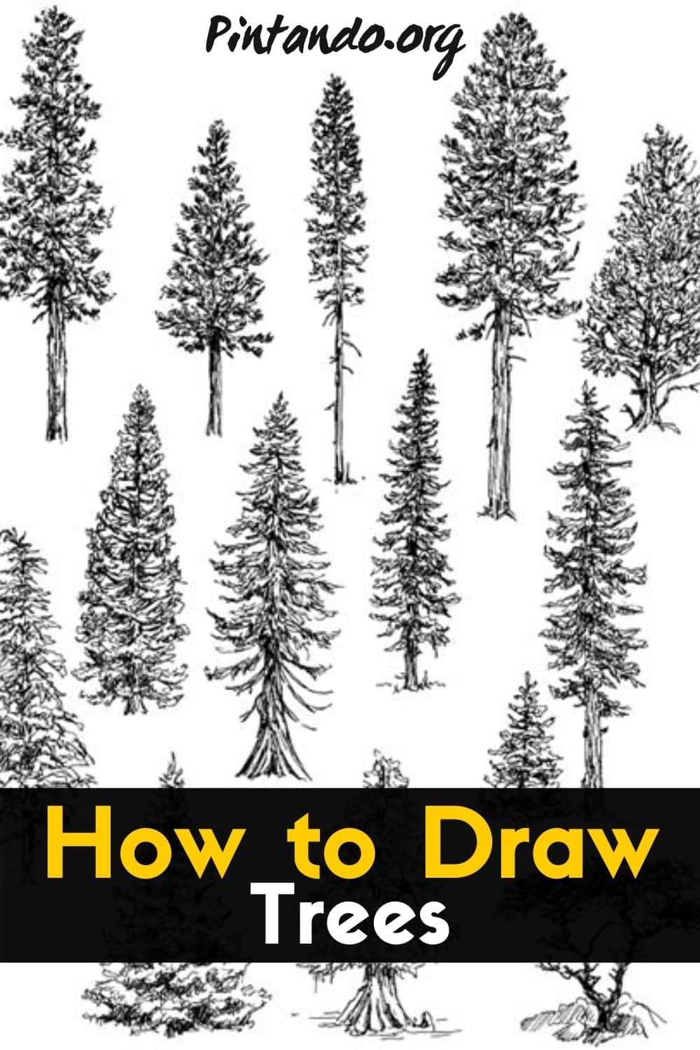 How to Draw Trees-min