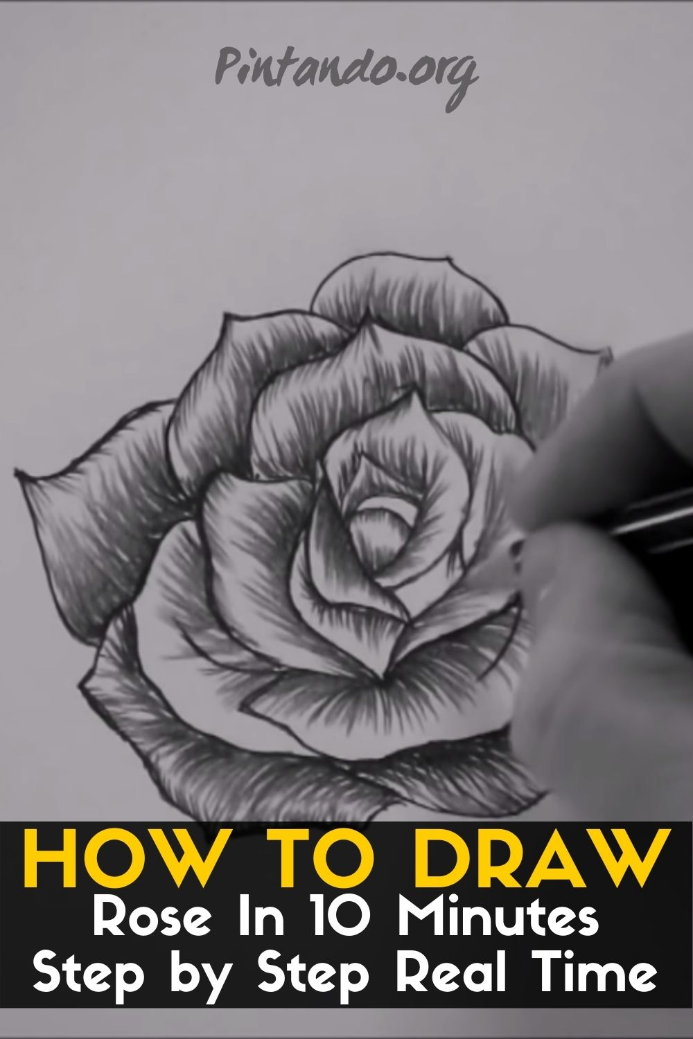 How to Draw a Rose In 10 Minutes Step by Step Real Time (1)