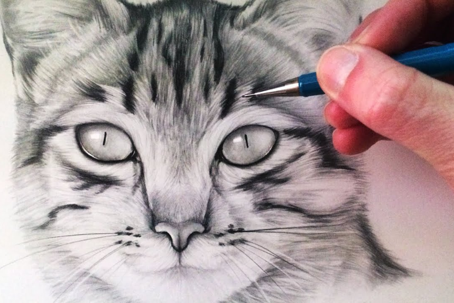 HOW TO DRAW A CAT (1)