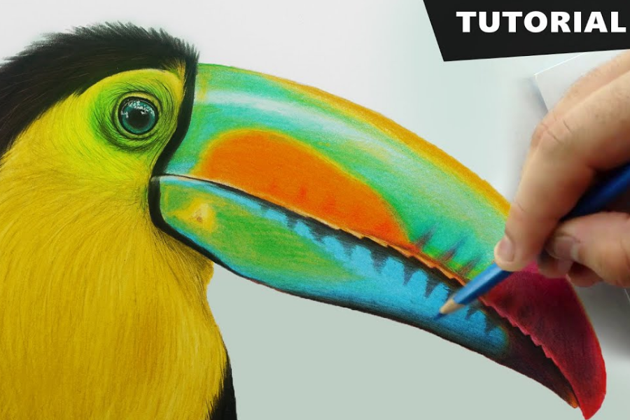 HOW TO DRAW TOUCAN BIRD WITH PENCIL COLORS (1)