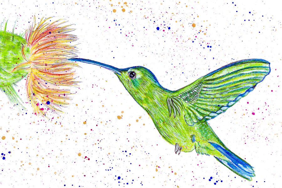 HOW TO PAINT A HUMMINGBIRD IN WATERCOLOR (1)
