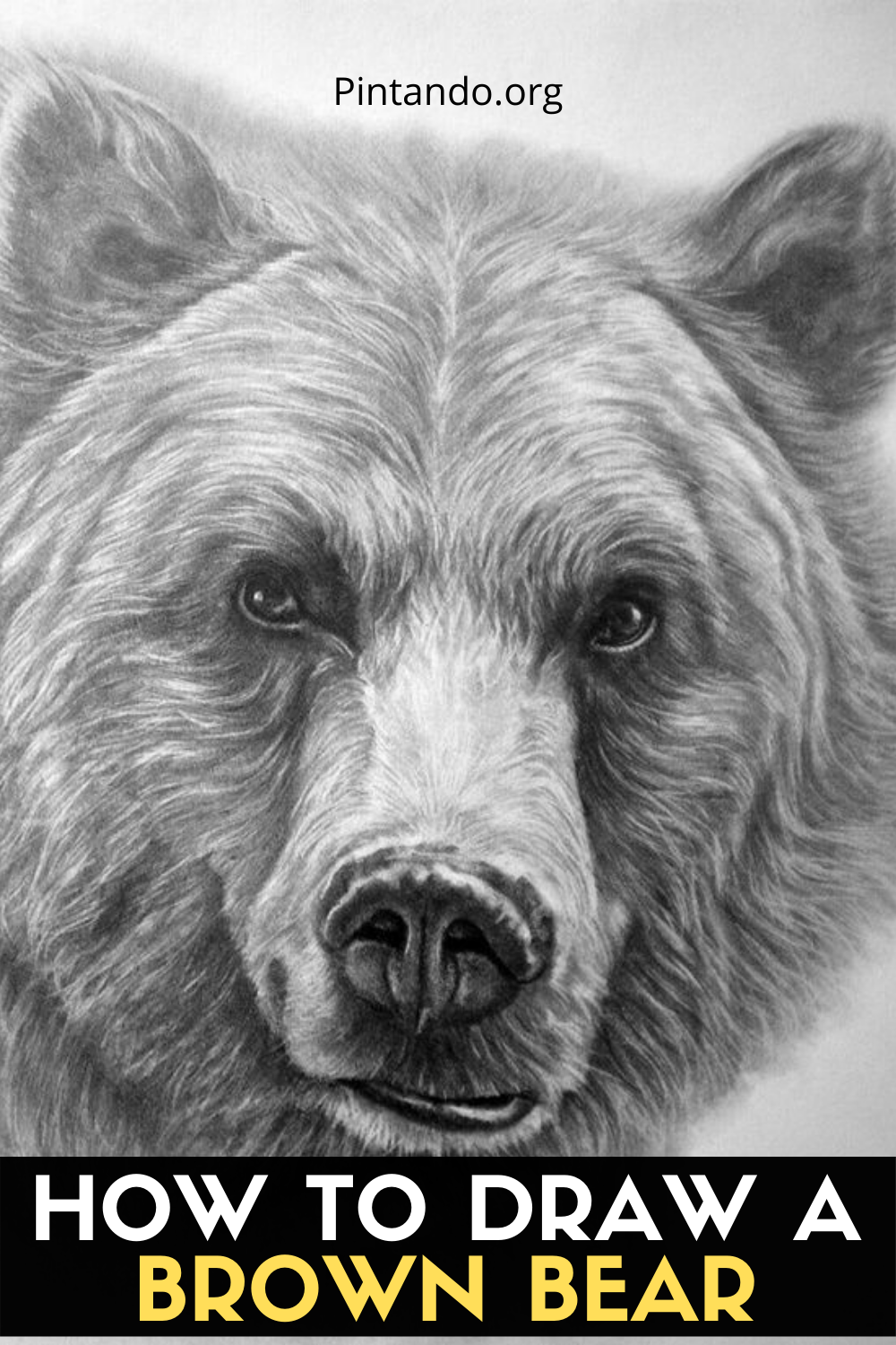 HOW TO DRAW A BROWN BEAR (1)