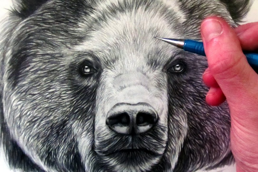 HOW TO DRAW A BROWN BEAR